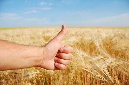 hand show ok over wheat field photo