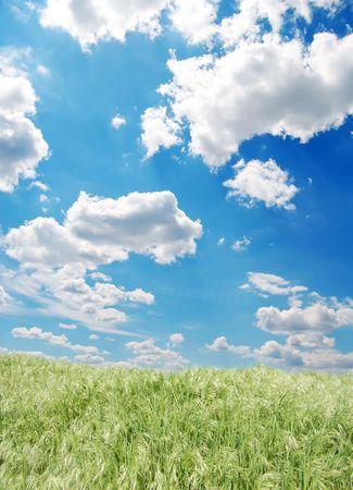 Green field Stock Photo - 5949389