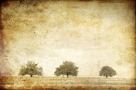 Trees in the summer field. Photo in old image style.  photo