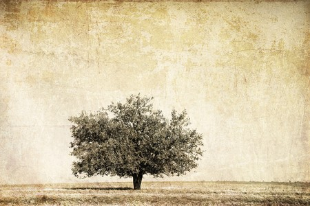 Tree in the summer field. Photo in old image style.  photo