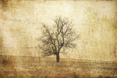 Tree in the autumn field. Photo in old image style.  photo