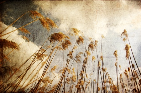 Cane and blue sky with clouds. Photo in old color image style. Stock Photo - 10690071