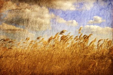 biomasa: Ca�a y azul cielo con nubes. Foto viejo estilo de imagen de color.