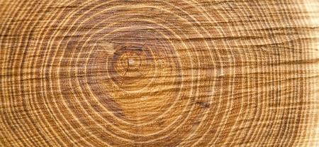 boom kappen: houtstructuur