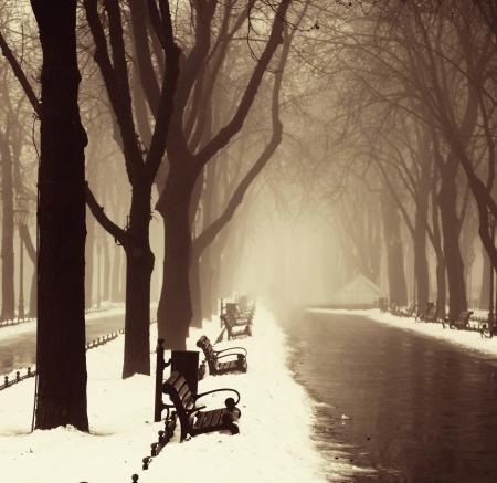 snow ground: Winter alley in Odessa, Ukraine. Stock Photo