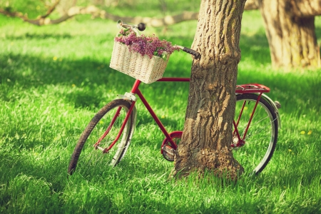 Vintage bicycle waiting near tree Stock Photo - 20213598
