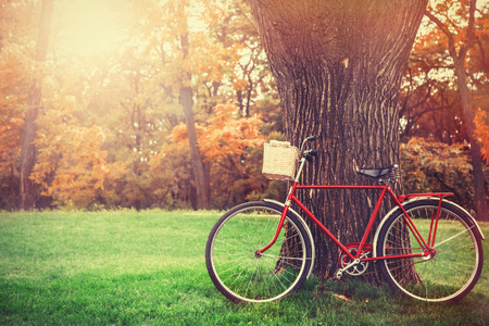 Bicicleta de la vendimia esperando cerca del árbol Foto de archivo
