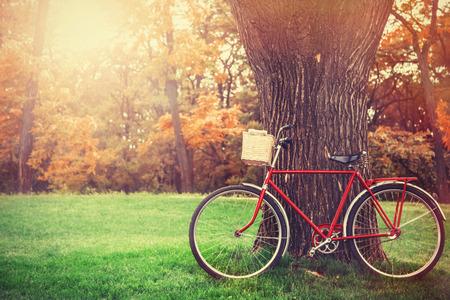 bicicleta retro: Bicicleta de la vendimia esperando cerca del �rbol Foto de archivo