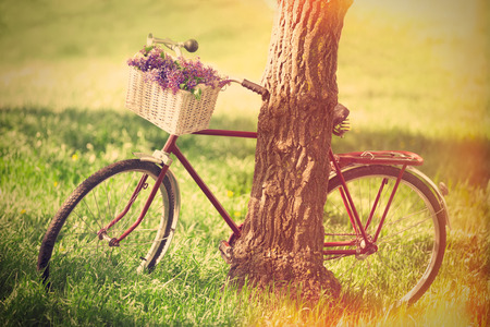 endear: Vintage bicycle waiting near tree