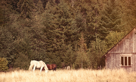 ridgeline: Old house and horses in the forest, Ukraine