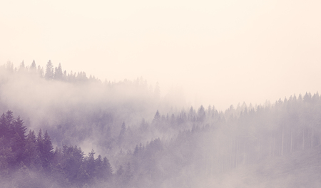 Fog in the forest in autumn time Foto de archivo