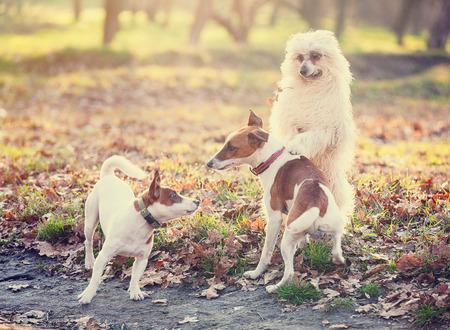perros jugando: foto de los perros lindos que juegan en el parque Foto de archivo
