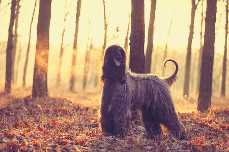 photo of the cute dog walking in the park Stock Photo