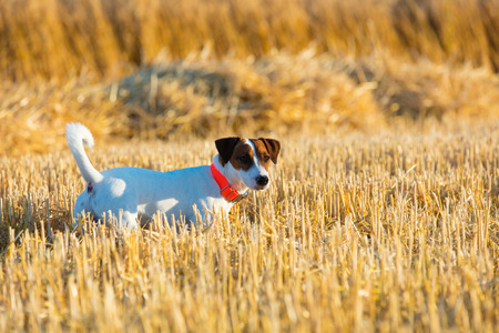 photo of the cute dog walking on the field