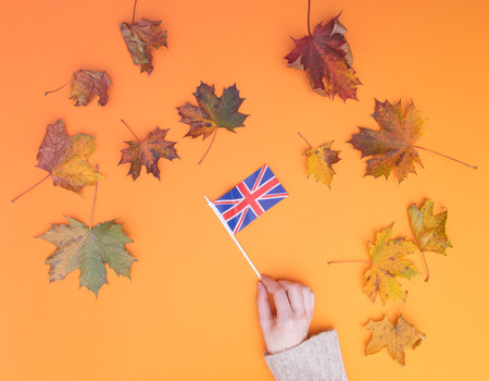 Above view at hands holding Great Britain flag with autumn maple leaves around it Stock Photo