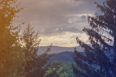 View at forest landscape of Karpach in Poland