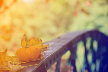 Yellow pumkin with leaves on metal bridge in a park Stock Photo