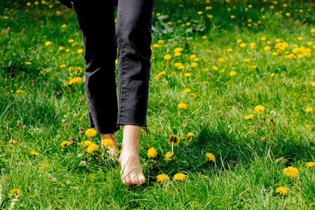 Female foots on dandelions meadow in spring time