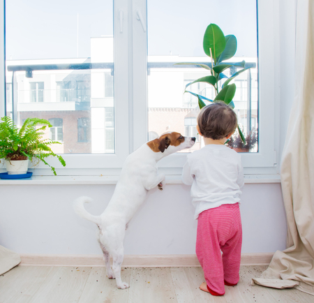 Little toddler boy with dog and plant near window