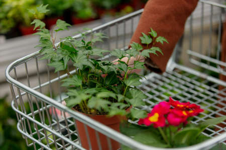 woman's hand puts ivy in a cart in a garden store