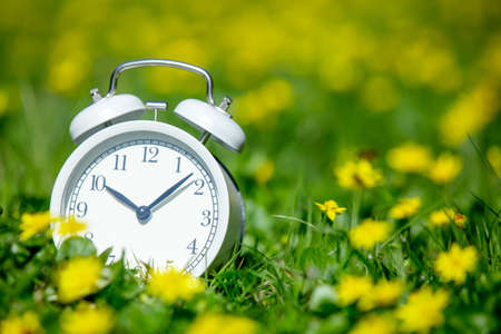 White classic alarm clock with bells on green meadow with yellow flowers
