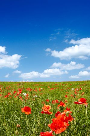 Beautiful landscape - with poppy flowers in foreground - great blue sky with fluffy clouds photo