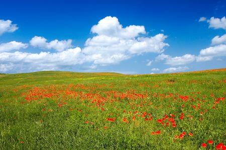 foreground: Beautiful landscape - with poppy flowers in foreground - great blue sky with fluffy clouds