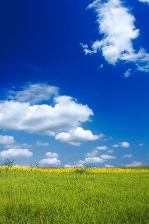 Beautiful landscape - green grass - great blue sky with fluffy clouds photo