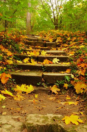 imaginor: Fall Ascension - stairs in the park dappled with golden leaves