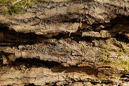 The trunk of an old fallen tree with a rough textured shape