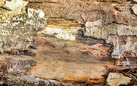 The old surface of the wooden frame.Texture.Background.