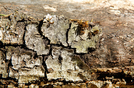 Old fallen rotten wood with holes in the surface