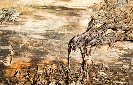 Old fallen tree with rough textured poverhnostyu Foto de archivo