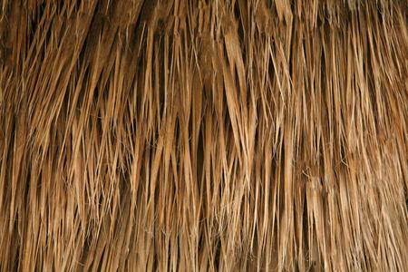 Le mur est fait d'herbe sèche. Texture ou arrière-plan. Banque d'images