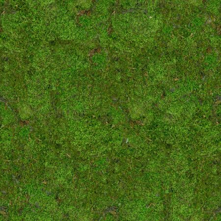 The forest soil underfoot is covered with green moss .Texture or background