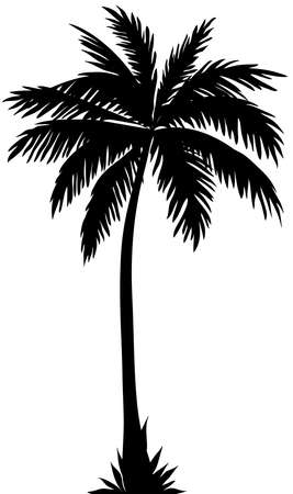 Silhouette of a coconut tree on a white background.Texture or font Banco de Imagens