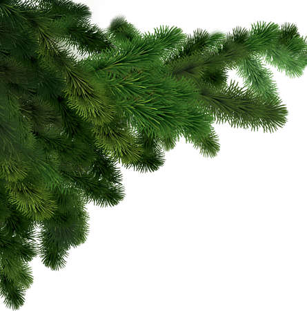 Green spruce branches on a white isolated background. New year greeting card