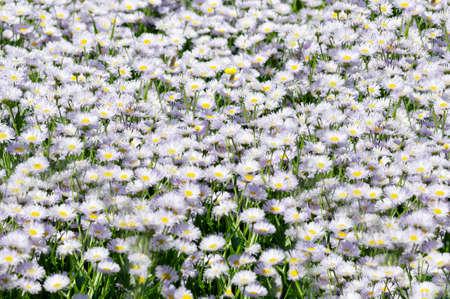 Summer wildflowers in a meadow close up Archivio Fotografico