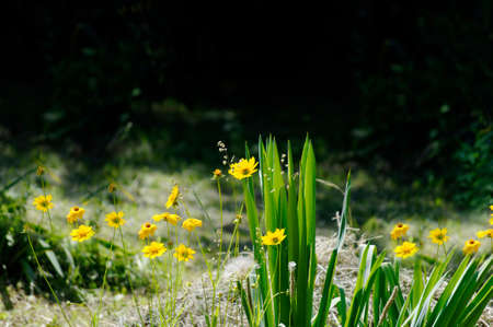 Outside in the garden small yellow flowers bloomed