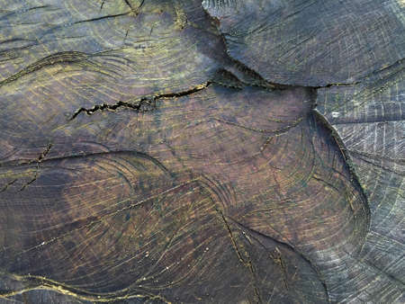 Cut of the stump of an old large tree with a textured surface close-up