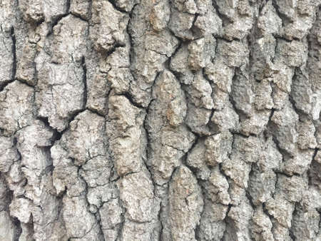 The texture of the gray tree bark image that fills the frame