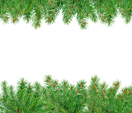 Pine green branches isolated on white background