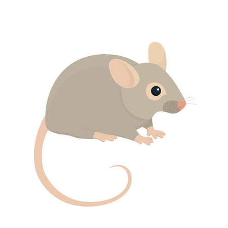house mouse: House Mouse - Illustration Isolated on White Background Illustration