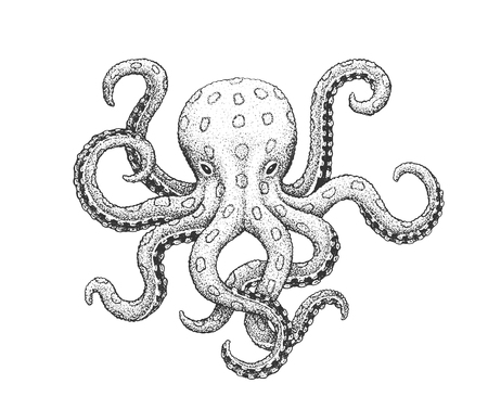 Blue-Ringed Octopus  - Classic Drawn Ink Illustration Isolated on White Background 向量圖像
