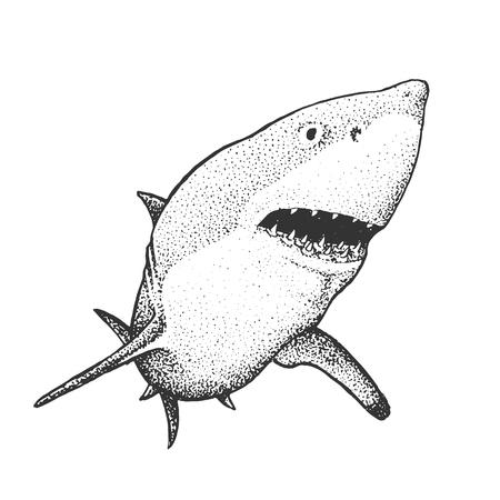 White Shark - Classic Drawn Ink Illustration Isolated on White Background Vector Illustration