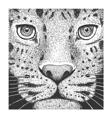 black and white image drawing: Amur Leopard - Classic Drawn Ink Illustration Isolated on White Background Illustration