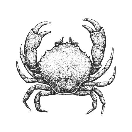 illustration line art: Crab - Classic Drawn Ink Illustration Isolated on White Background