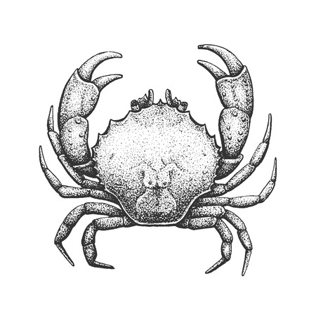 Crab - Classic Drawn Ink Illustration Isolated on White Background