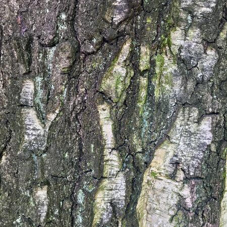 Texture of Tree Bark Close Up
