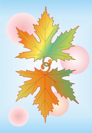 decorative symbol  maple leaves